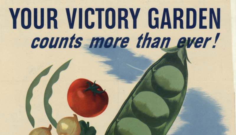 a victory garden helps union mission feed the needy - The Victory Garden